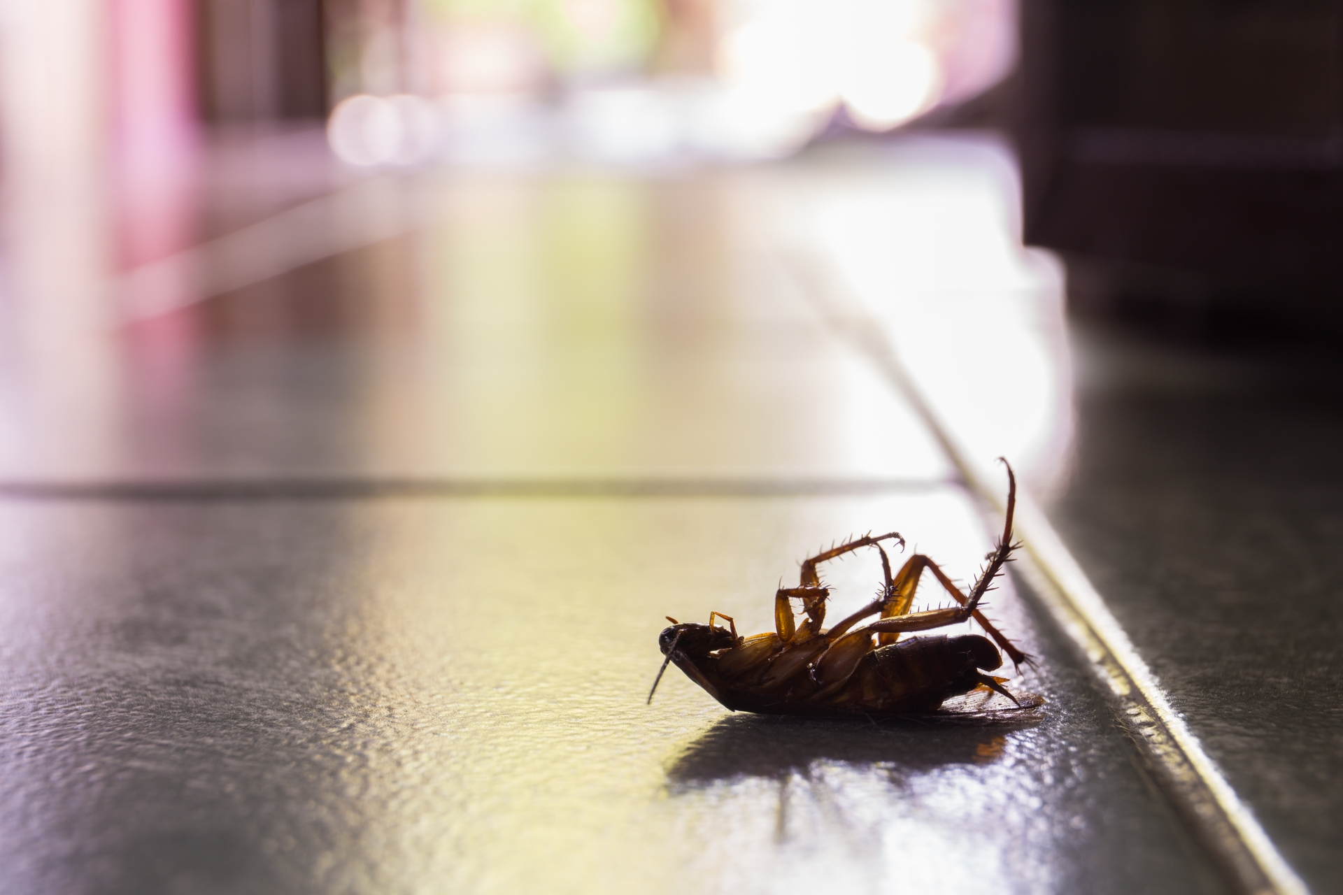 Cockroach Control, Pest Control in Elephant & Castle, SE17. Call Now 020 8166 9746