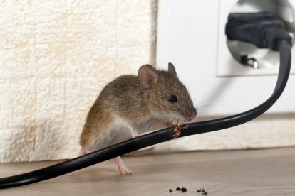 Pest Control in Elephant & Castle, SE17. Call Now! 020 8166 9746