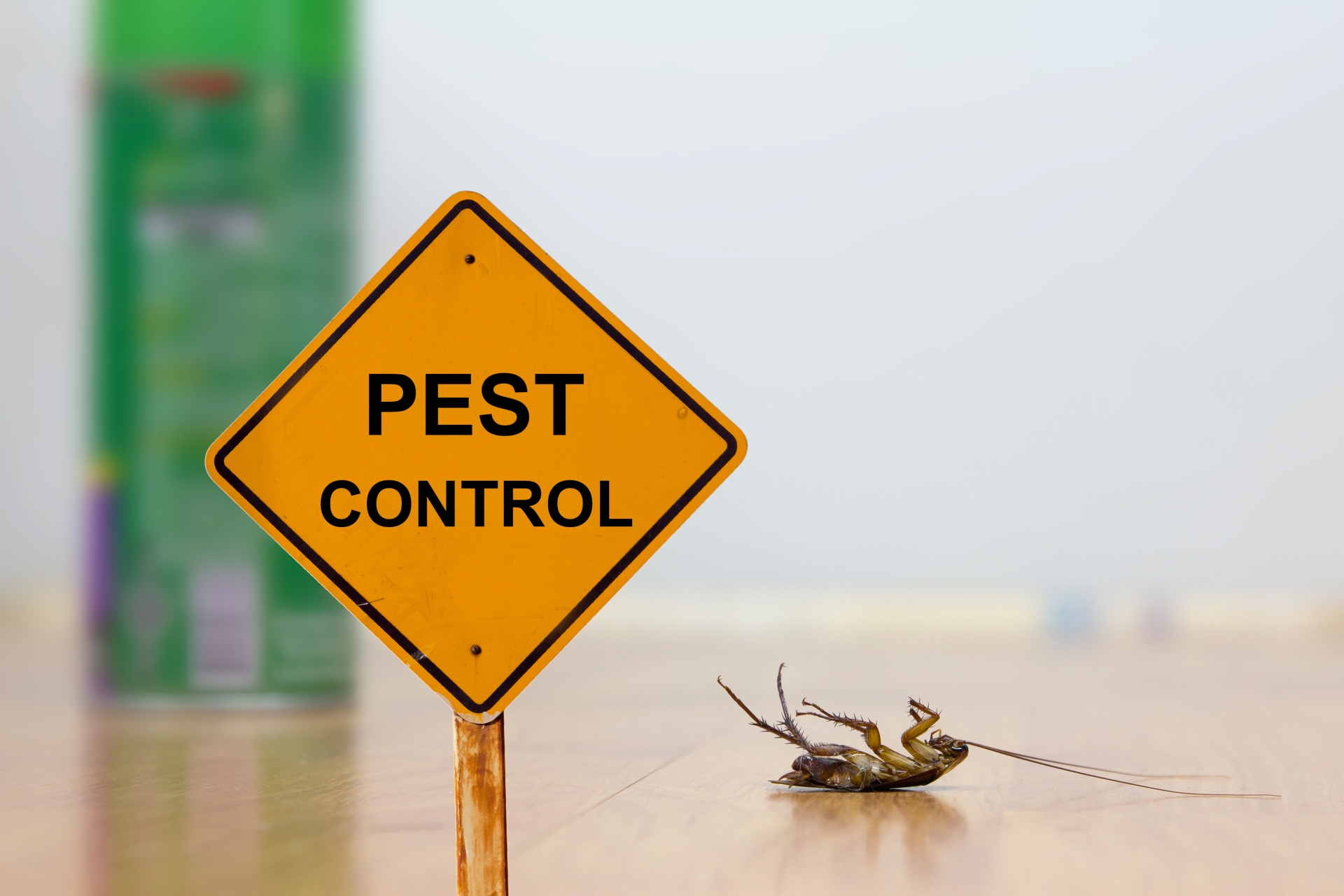 24 Hour Pest Control, Pest Control in Elephant & Castle, SE17. Call Now 020 8166 9746